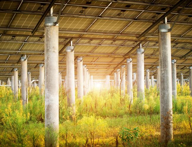 The Art of Sustainable Progress